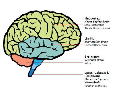 Pain Game - Brain structure