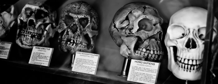 humans are animals - evolution skulls
